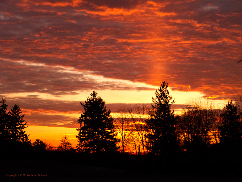 Photo: Brilliant sky with a sun pillar rising over trees. Photo by James Guilford.